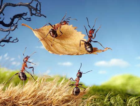 hormiga: hormigas voladoras en la hoja de oto�o, los cuentos de hormigas