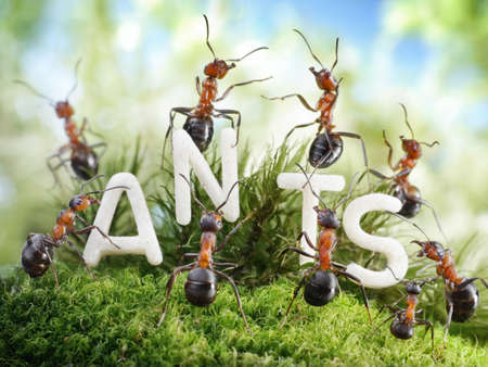 We Are The Ants. ant tales.  photo