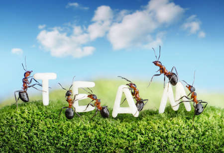 constructing: ants constructing word team with letters, teamwork concept