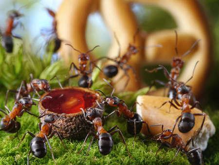 ameisenhaufen: Ameisen Honig trinken und Kuchen essen Tanzen und Singen bei Bankett in Ameisenhaufen, Ameisengeschichten
