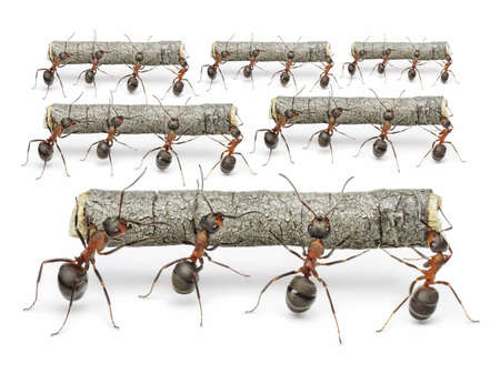 teams of ants work with logs,,  teamwork concept photo