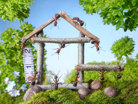 cartoon ant: team of ants constructing wooden house in forest, teamwork, ant tales