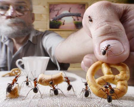 Belohnungen menschlichen Ameisen mit backen, Ameisengeschichten Standard-Bild - 19808796
