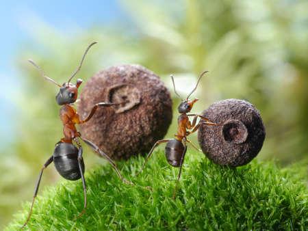 hormiga: grandes y peque�as hormigas tiran semillas correspondientes, cuentos de hormigas