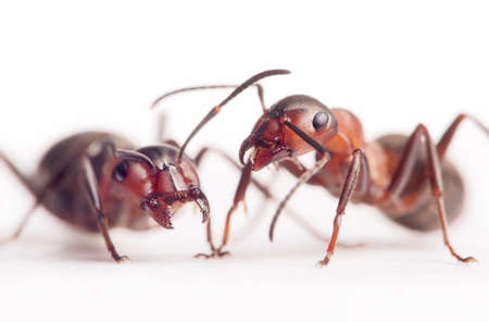 each ant has very individual character and image