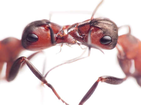 ants are very tender and loving only with members of their own family, trofollaxis         photo