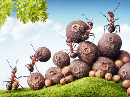 team of ants collecting seeds in stock, teamwork Banque d'images