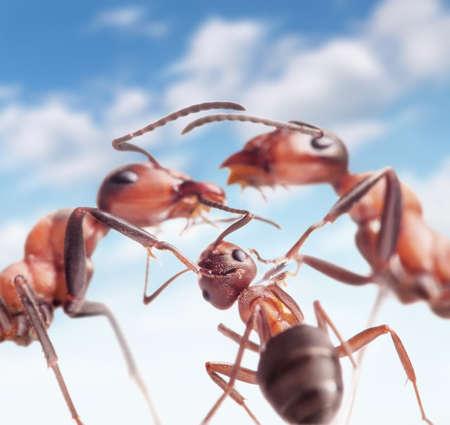 love in ants family under peaceful sky  Standard-Bild