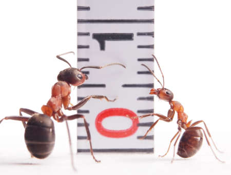 size matters, ants formica rufa and centimeter Stok Fotoğraf - 20434109