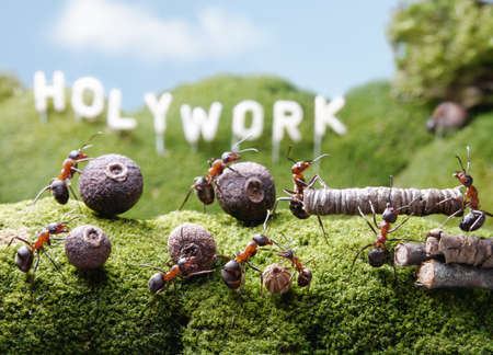 ants teamwork at Holywork hills, Ant Tales photo