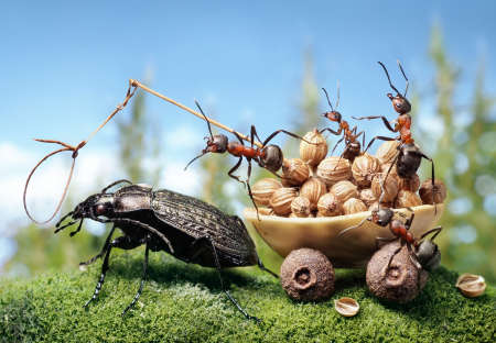 cartoon ant: team of ants harnessing the bug, ant tales