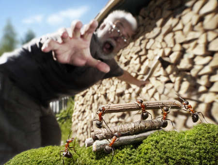 human, ants and firewood, robbery or help, ant tales