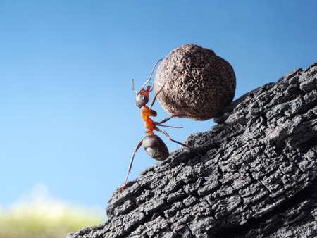 ant: hormiga roja rueda de piedra cuesta arriba Foto de archivo