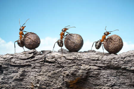 team of ants rolling stones on rock, teamwork photo