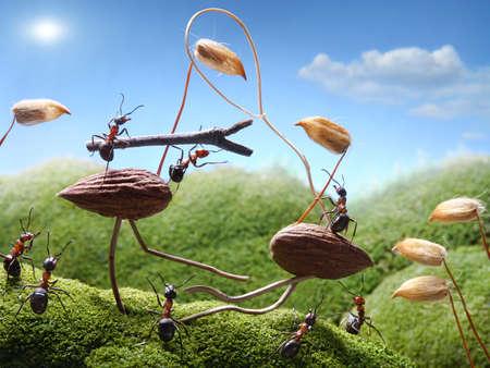 hormiga caricatura: hormigas del torneo en las aves, los cuentos de hormigas Foto de archivo