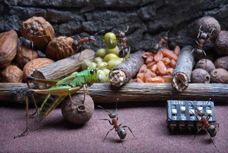 hormiga caricatura: hormigas desarrollan saltamontes para trabajar, los cuentos de hormigas