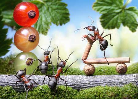 hormiga caricatura: semáforos rojos y freno de bicicleta perder, cuentos de la hormiga