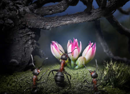 ants find secret flower in night forest, ant tales
