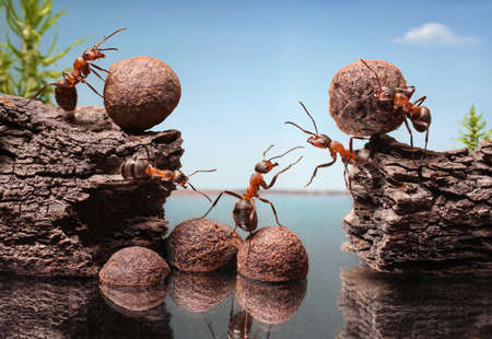 constructing: team of ants work constructing dam, teamwork Stock Photo