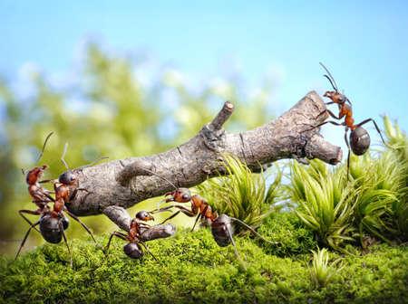 team of ants carry log, teamwork