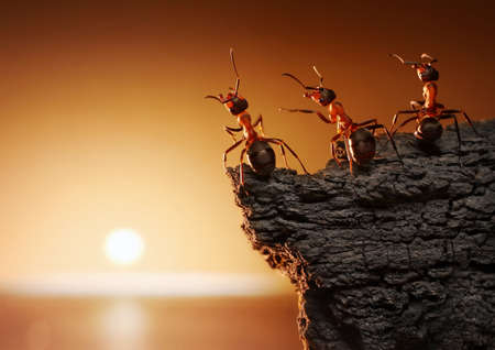 team of ants on rock watching sunrise or sunset at sea
