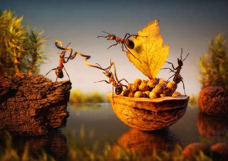 team of ants moor bark with cargo of nuts, teamwork