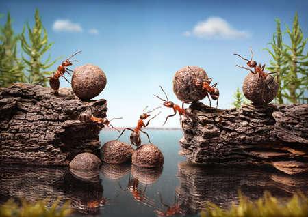 team of ants work constructing dam, teamwork Stock Photo