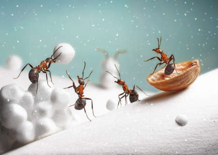 Ants ride sledge and play snowballs on Christmas Stock Photo