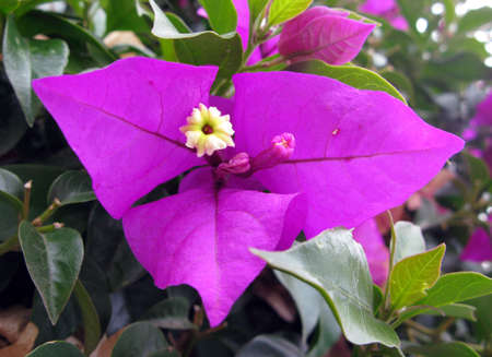 catchy: violet