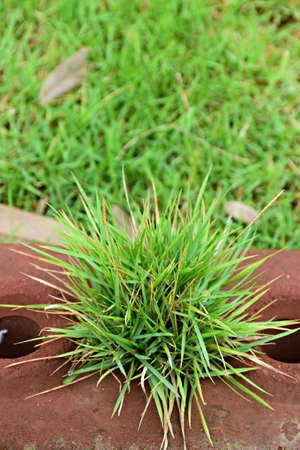 depend: the grass is ordinary , depend on at the lawn in front of the house , nothing is special