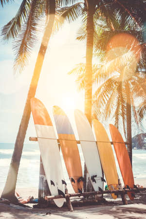 Many surfboards beside coconut trees at summer beach with sun light and blue sky background. 免版税图像 - 104286544