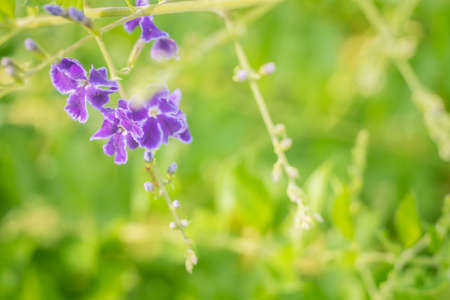 Selective focus of beautiful colorful flowers with summer bokeh background.vintage color style.
