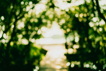 Blur nature green bokeh with small bridge in mangrove forest background. Stok Fotoğraf