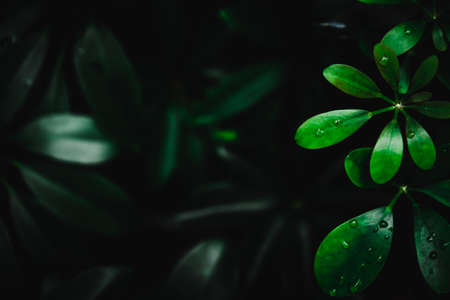 Selective focus closed up tropical summer green leaf background with dark color tone Stockfoto