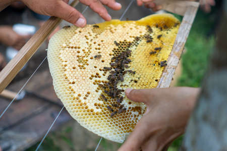 Closed up of bee colony full of honey high nutrient and vitamin transfer to beekepping handmade box. Imagens - 143023302