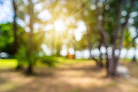 Blur nature bokeh green garden with tropical leaf copy space background.