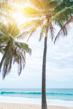 tropical palms tree at summer beach with blue sky and sun light background. 免版税图像 - 154837560