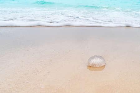Jellyfish animal on sand summer blue sea  tropical beach background. 免版税图像 - 154744191