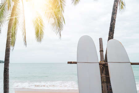 Many surfboards beside coconut trees at summer beach with sun light and blue sky background.