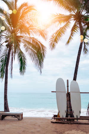 Many surfboards beside coconut trees at summer beach with sun light and blue sky background. 免版税图像 - 154855018