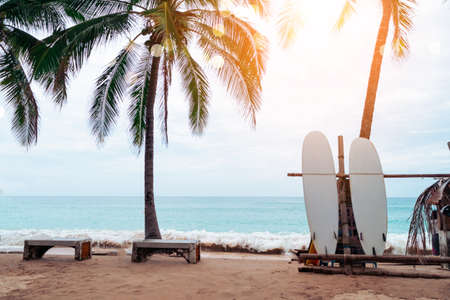 Many surfboards beside coconut trees at summer beach with sun light and blue sky background. 免版税图像 - 154855269