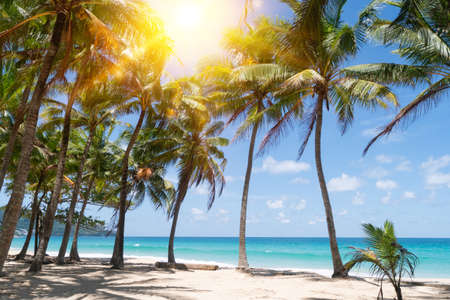 Tropical nature clean beach and white sand in summer with palm tree leaf sun light blue sky and bokeh abstract background. Stockfoto