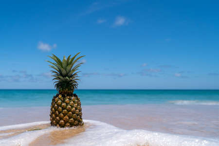 Pineapple on sand with on blue sky summer concept background. 免版税图像