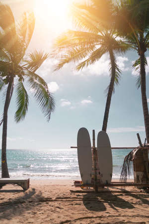 Surfboards beside coconut trees at summer beach with sun light.
