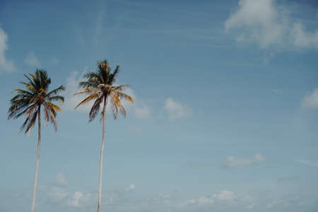 Minimal tropical coconut palm tree in summer with sky background. Copyspace you can put text on. Vintage film color tone style.