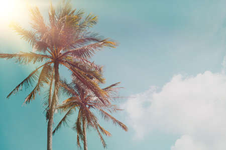 Tropical palm coconut trees on sunset sky flare and bokeh nature blue sky background.