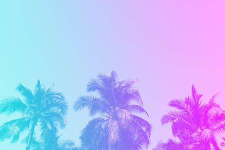 Tropical palm coconut trees on sunset sky flare and bokeh nature colorful background. Imagens
