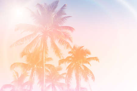 Tropical palm coconut trees on sunset sky flare and bokeh nature colorful background. 免版税图像