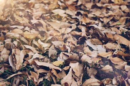 Dry leaf on ground in park texture abstract nature background. Stock Photo