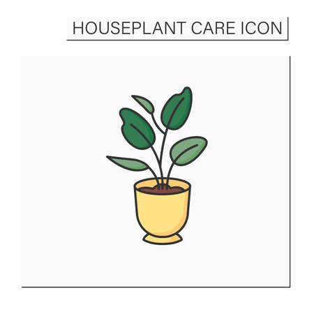 Ficus elastica color icon